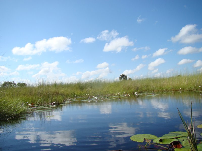 Walking safaris Okavango Delta
